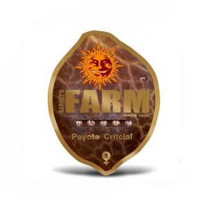 Семена Peyote Critical Barneys Farm Seeds Гроушоп AvingudaHaze