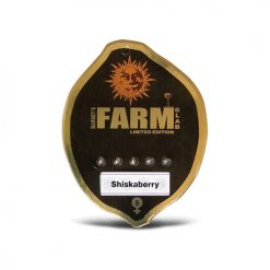 Семена Shiskabarry Barneys Farm Seeds Гроушоп AvingudaHaze