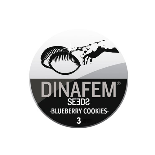 Семена Blueberry Cookies Dinafem Seeds Гроушоп AvingudaHaze.com