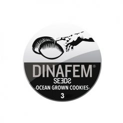 Семена Ocean Grown Cookies Dinafem Seeds Гроушоп AvingudaHaze.com