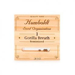 Семена Gorilla Breath Humboldt Seeds Гроушоп AvingudaHaze.com